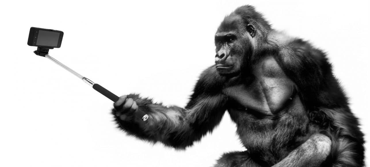 Gorille selfie animateur micro 2.0