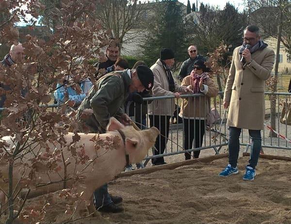 truie-animateur de la fête de la truffe-rabasse