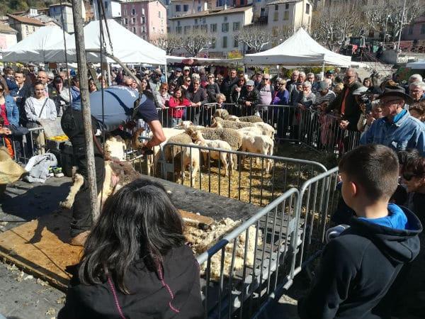 animateur de foire agricole-démonstration-moutons